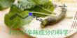 わさびの辛味成分アリルイソチオシアネートの科学-イメージ画像